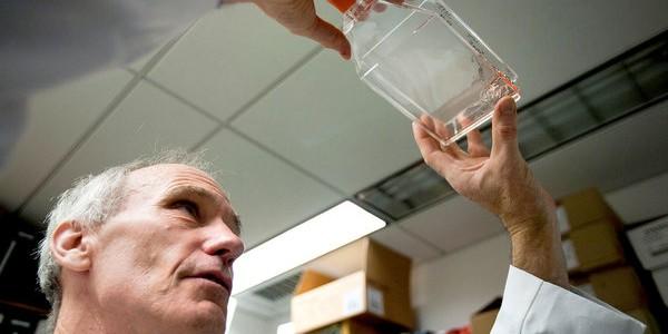Scientists Identify Gene Turning
